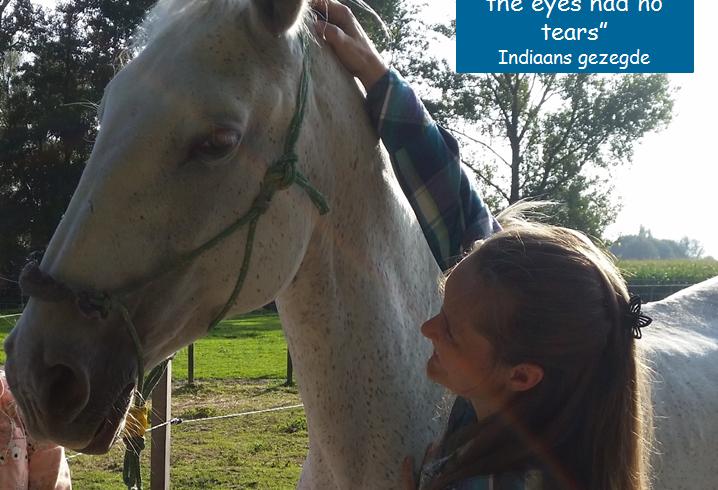 Het  mooiste paardenmoment van 2014