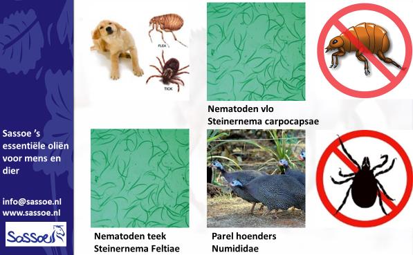 Natuurlijke vijanden vlooien en teken